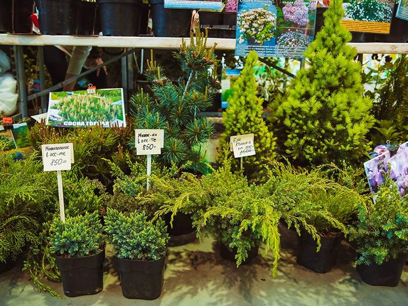 XI специализированная выставка-продажа «Петербургская зеленая неделя»