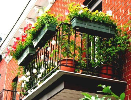 Лучшие виды растений для балкона